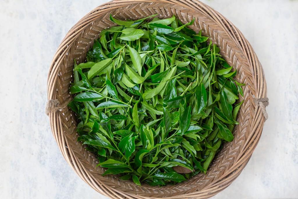 fresh picked tea leaves