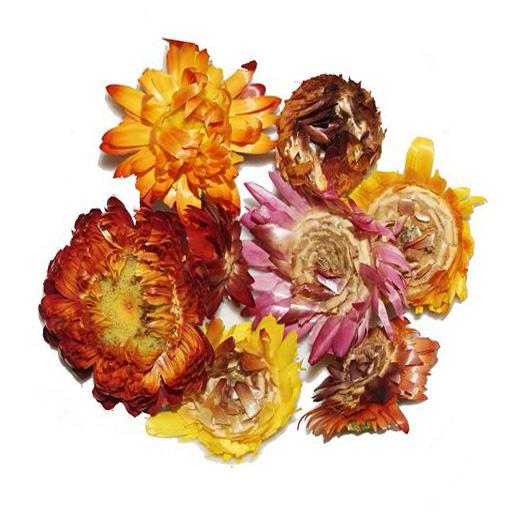 Chrysanthemen Tee - Qi Cai Ju