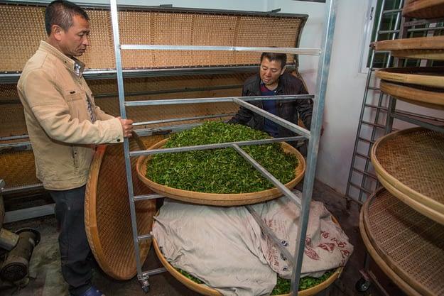 Teeblätter werden eingepackt