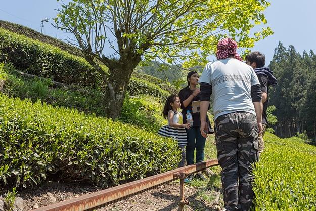 Honyama Teeanbau
