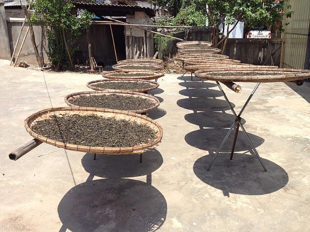 Manzhuan Teeblätter